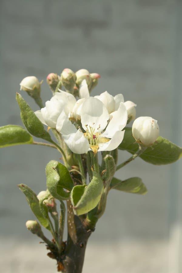 blommad övre tree arkivfoton