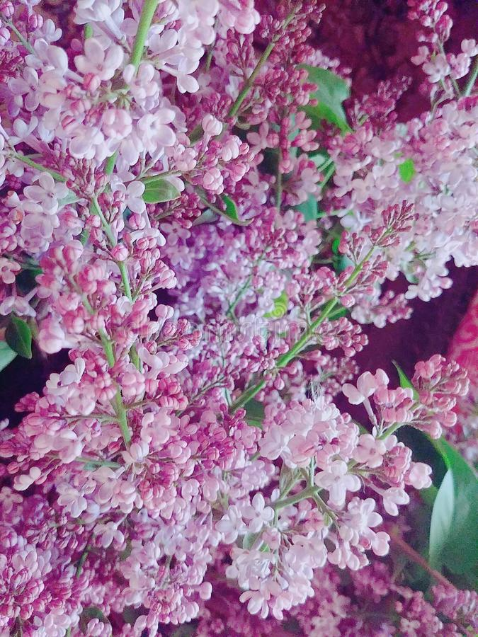 Blommadroppe fotografering för bildbyråer