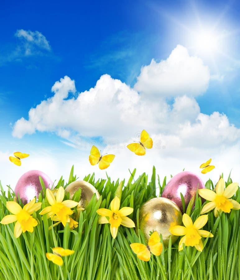 Blommafält med pingstliljan, easter ägg i gräs arkivfoton