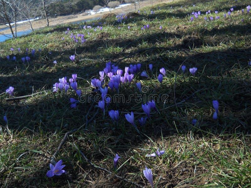 Blommafält med skugga royaltyfria bilder