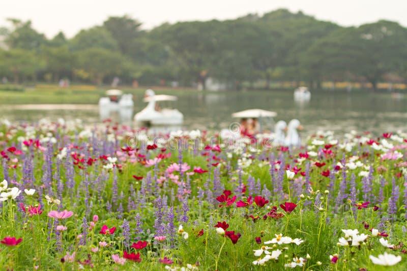 Blommafält och defocused av sjöbakgrund Selektivt fokusera arkivbild
