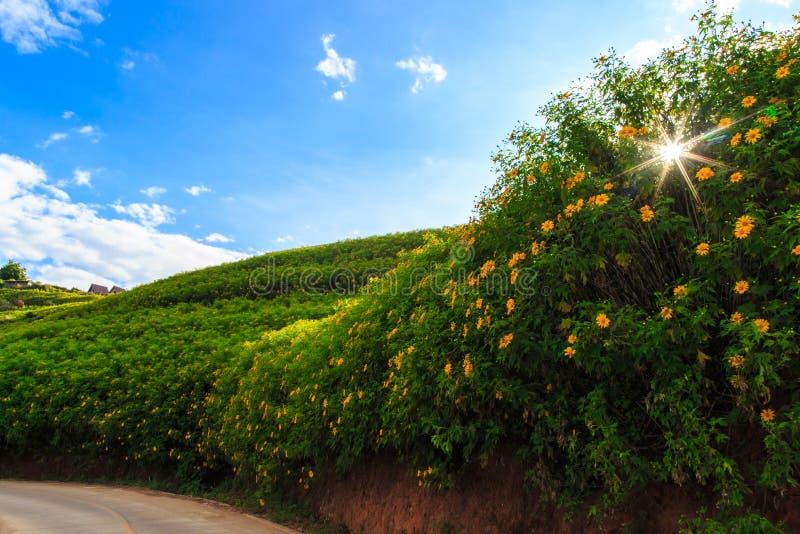 Blommafält på det tropiska berget under blå himmel arkivbilder