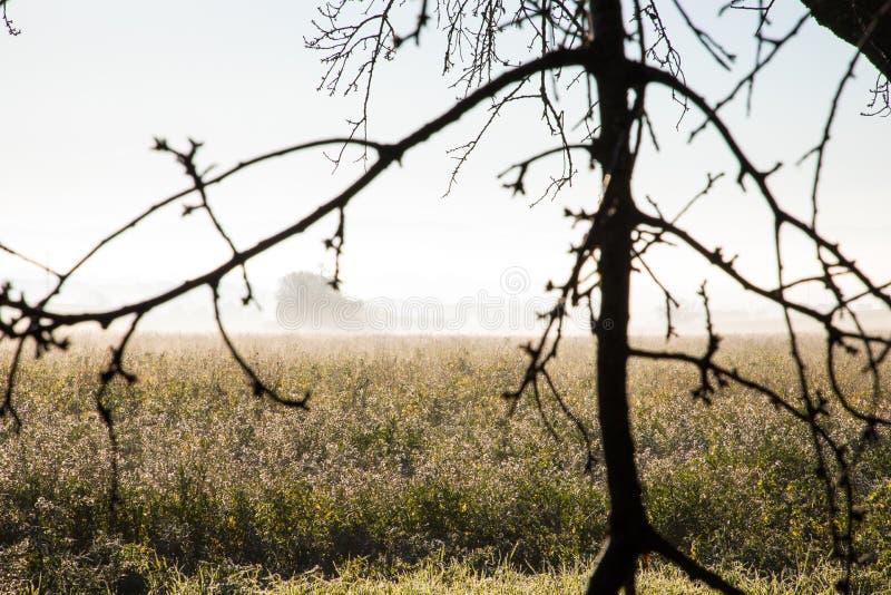 Blommafält på dimmig sedda igenom trädfilialer för vinter morgon arkivbild