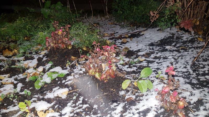 Blommafält som täckas med första snö royaltyfri fotografi