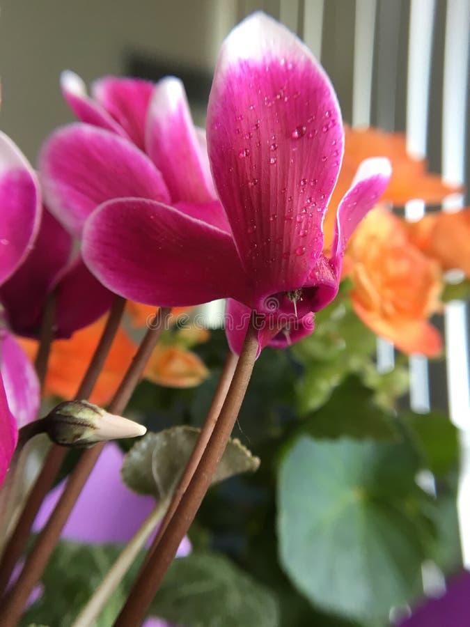 Blommaförälskelse royaltyfri fotografi