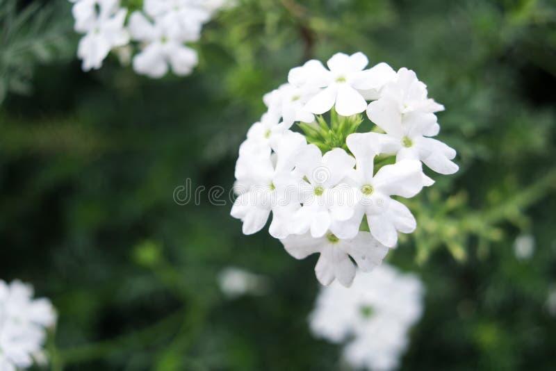Blommaförnyelse arkivbild