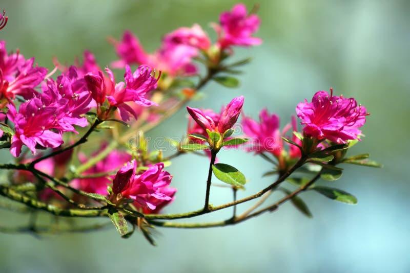 Blommafilialer royaltyfri foto