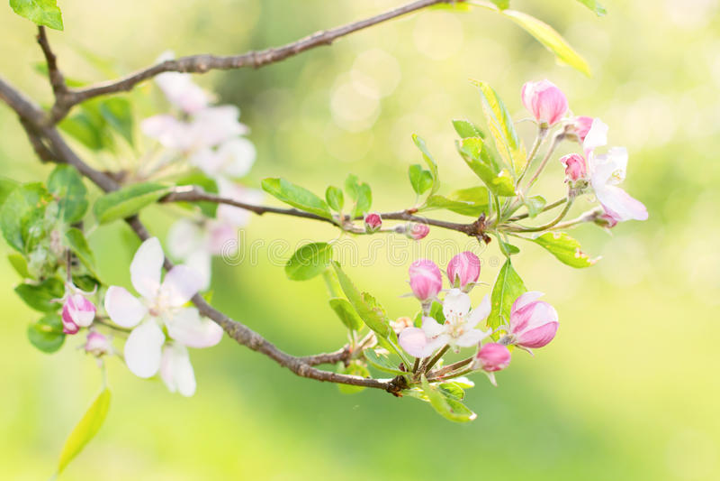 blommafjäder arkivbilder