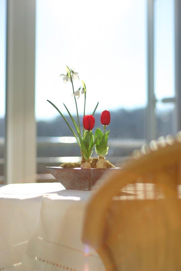 Download Blommafjäder fotografering för bildbyråer. Bild av vinter - 30329