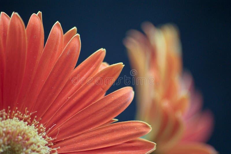 blommafjärdedel arkivfoto