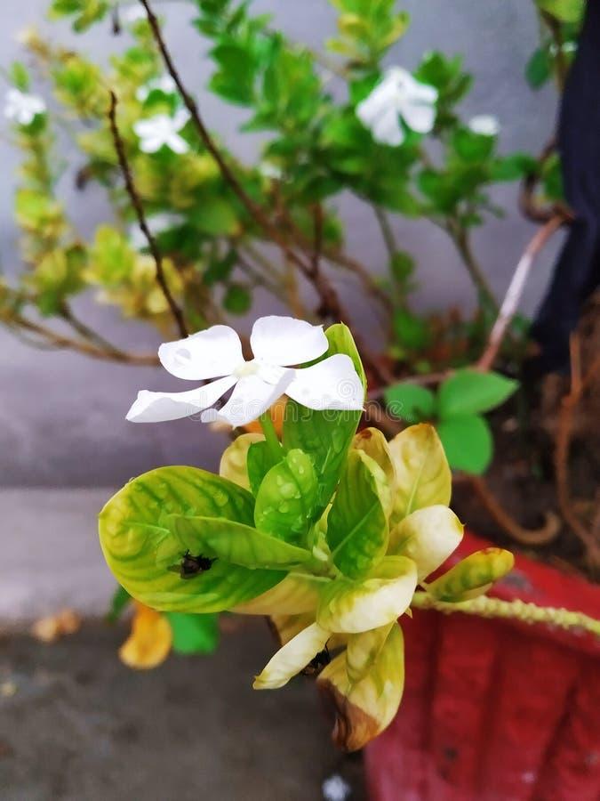 Blommafoto royaltyfri bild
