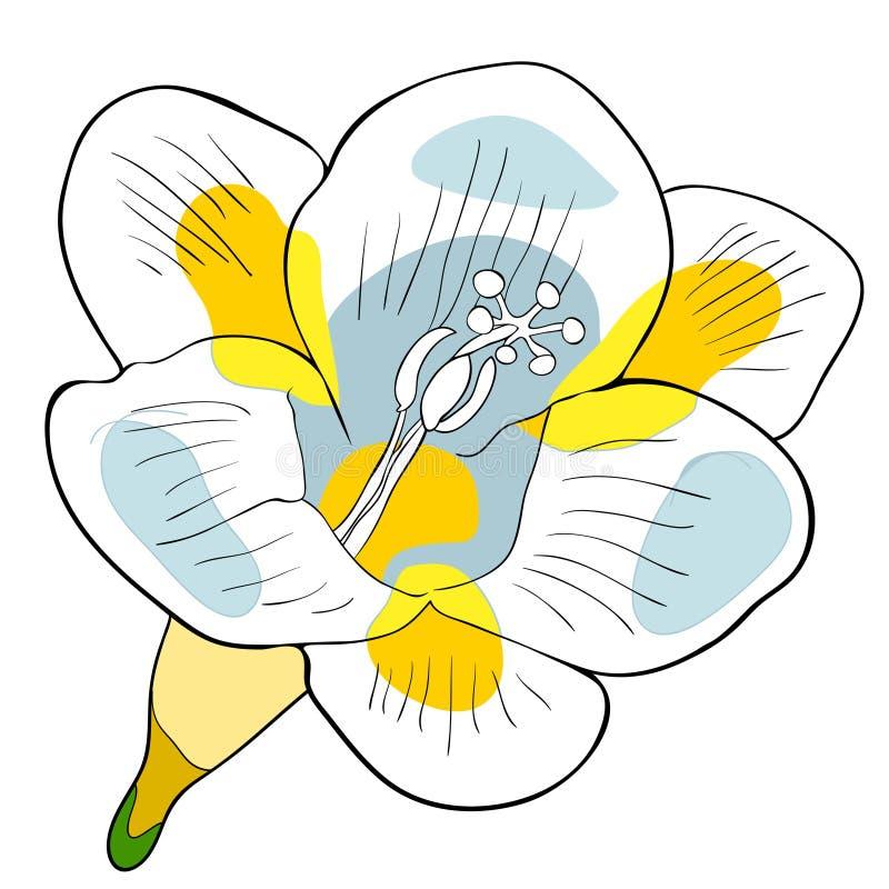 Blommafreesiasort av irisvektorillustrationen stock illustrationer