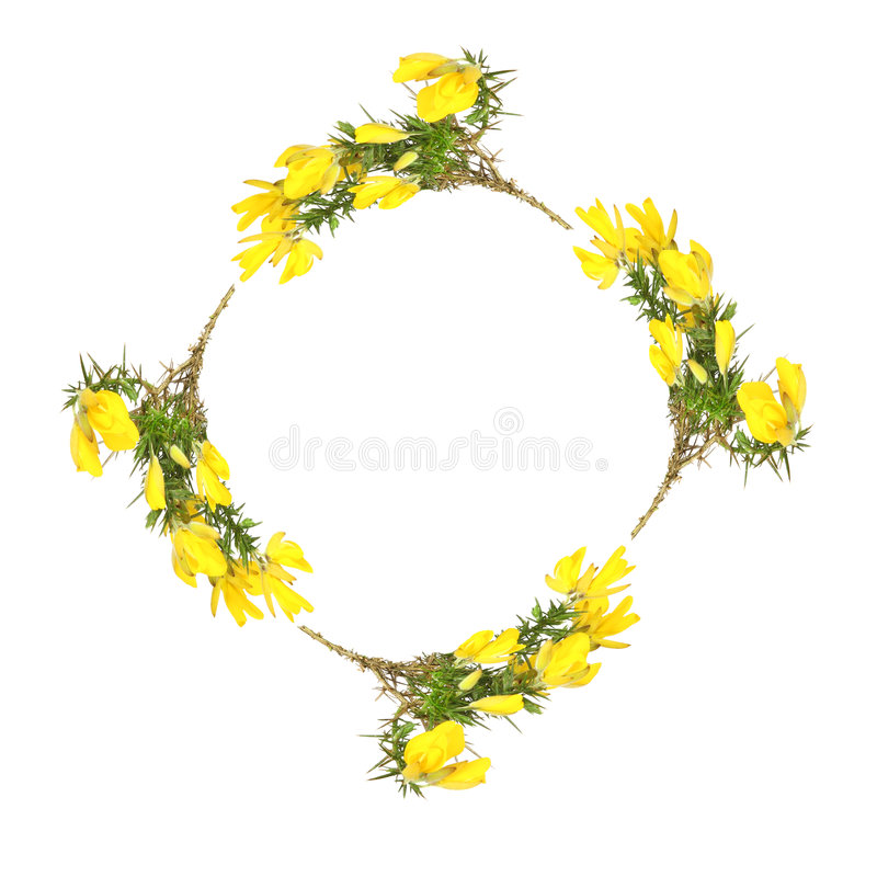 blommagirlandärttörne arkivfoton