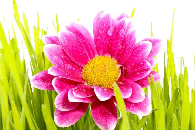 blommagräs royaltyfri bild