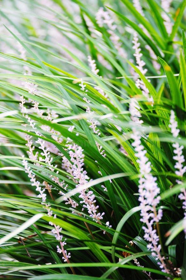 blommagräs royaltyfri foto