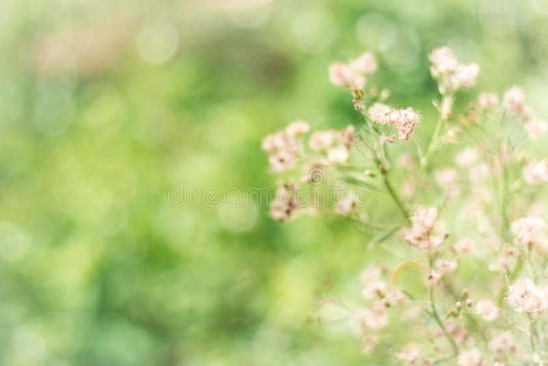 Blommagräsbakgrund arkivfoton
