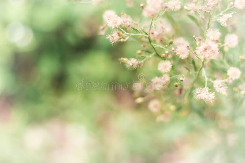 Blommagräsbakgrund royaltyfri fotografi