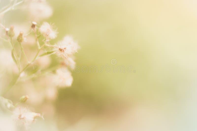 Blommagräsbakgrund arkivbild