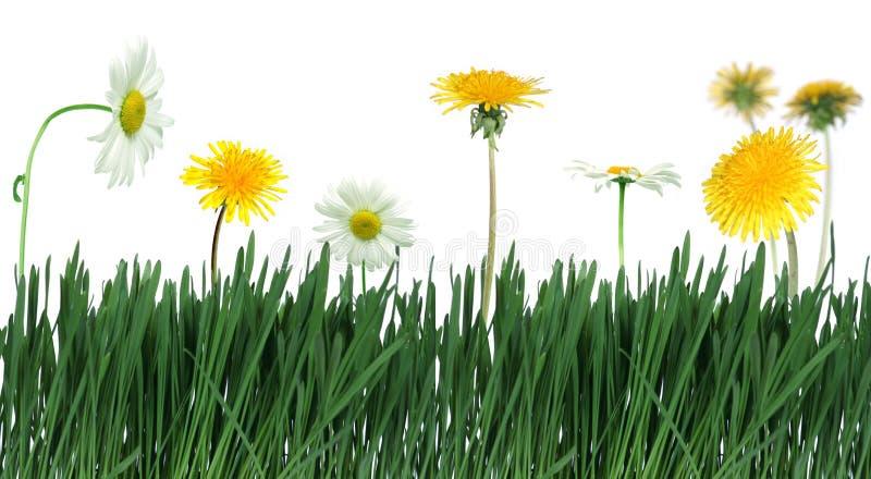 blommagräsgreen royaltyfria foton