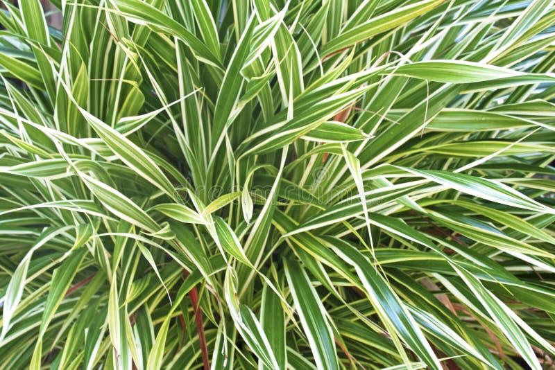 Blommagräsplanblad med den vita gränsen på bakgrund arkivbild