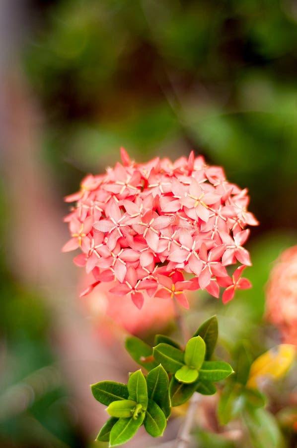 Blommagrov spik royaltyfri bild