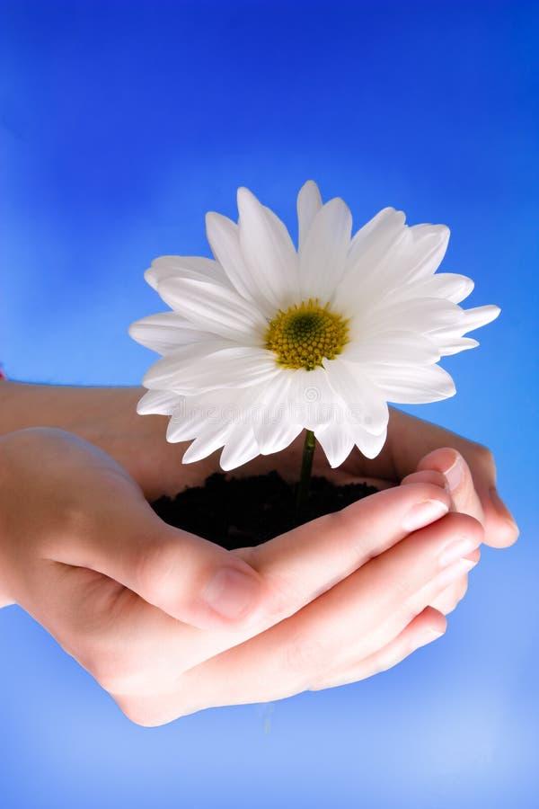 blommahänder fotografering för bildbyråer