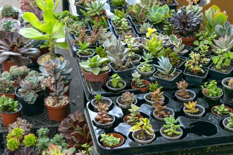 Blommahouseplantsgatan shoppar Olika typer av suckulenta Cactu royaltyfri bild