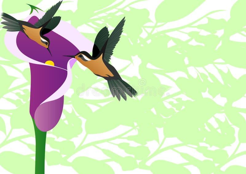 blommahummingbird vektor illustrationer