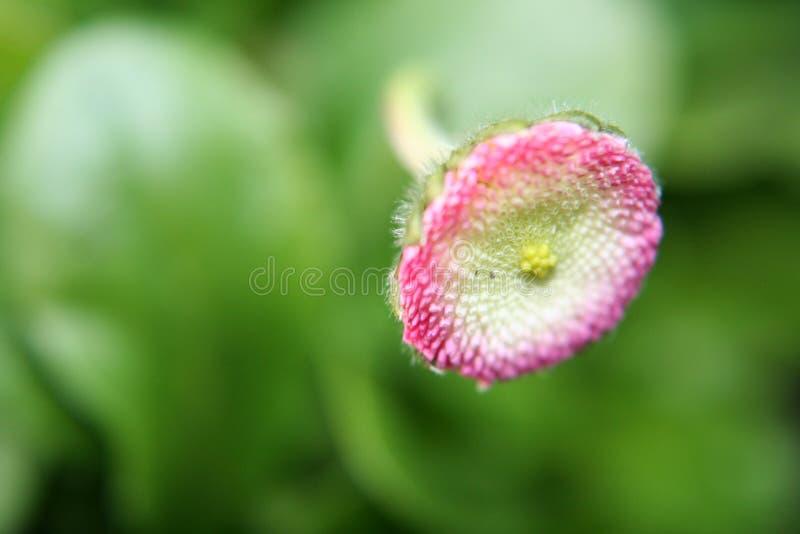 blommahuvud arkivfoto