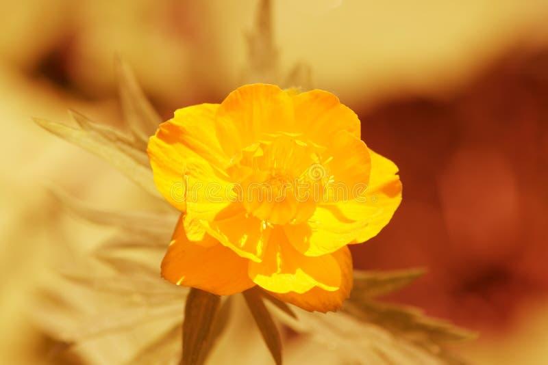 blommajordklot arkivbild