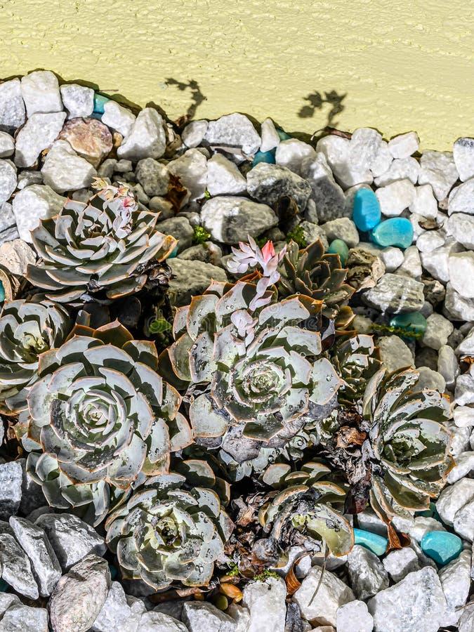 Blommaknoppar och daggdroppar och skuggor royaltyfri fotografi