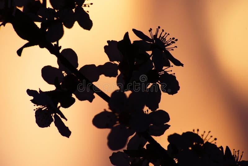 Blommakontur på vårsolnedgången arkivbilder