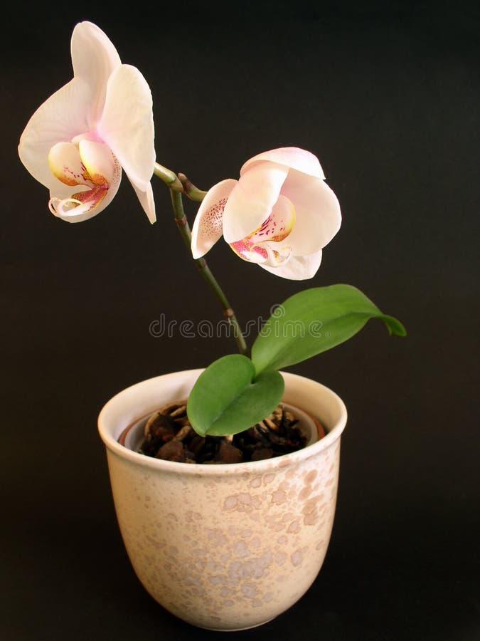 Blommakruka Arkivbild