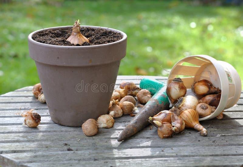 Blommakulor i trädgård royaltyfri bild