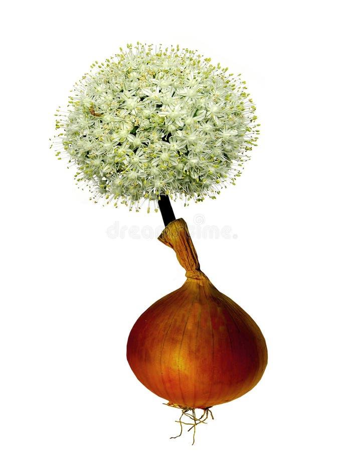 Blommalök Royaltyfri Bild