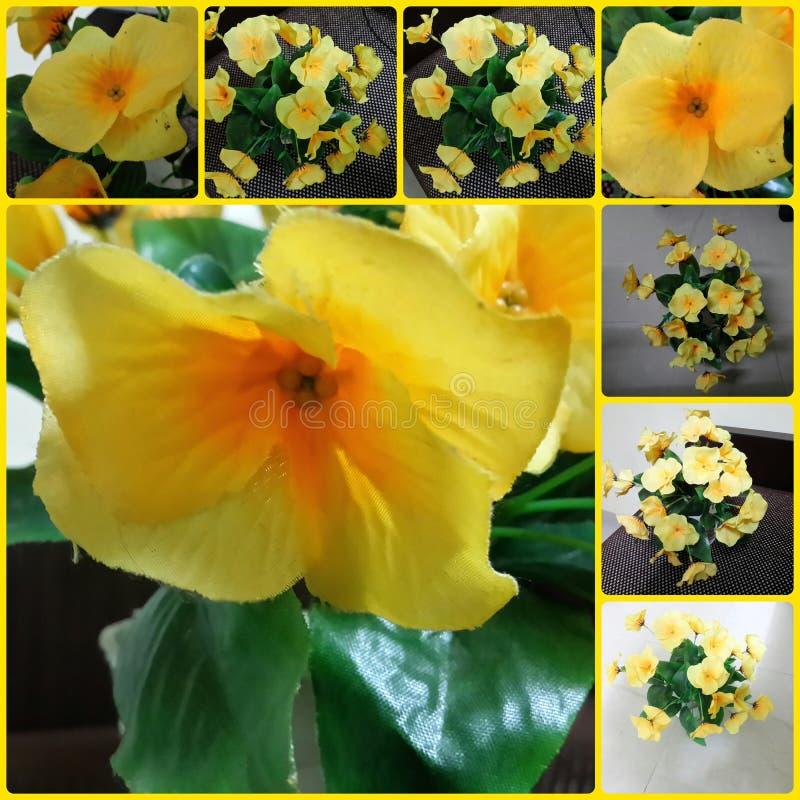 Blommaleksak royaltyfria bilder