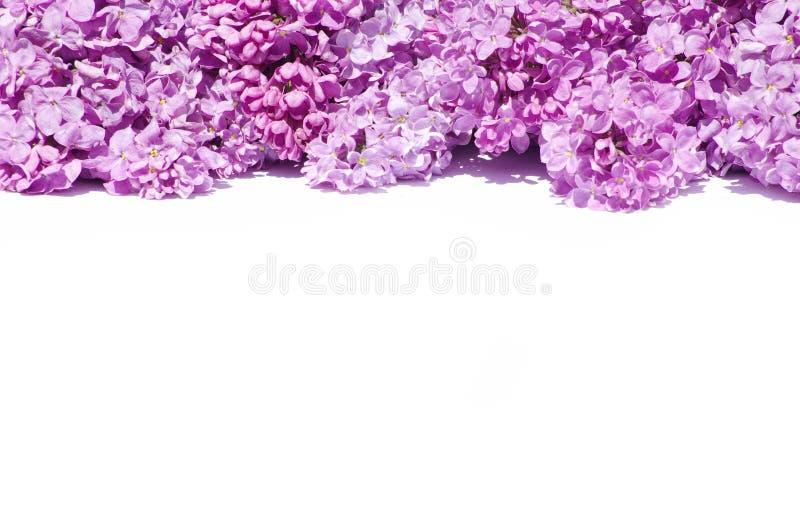 blommalila royaltyfri foto