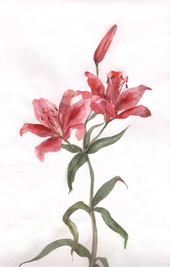 blommalilja som målar röd vattenfärg stock illustrationer