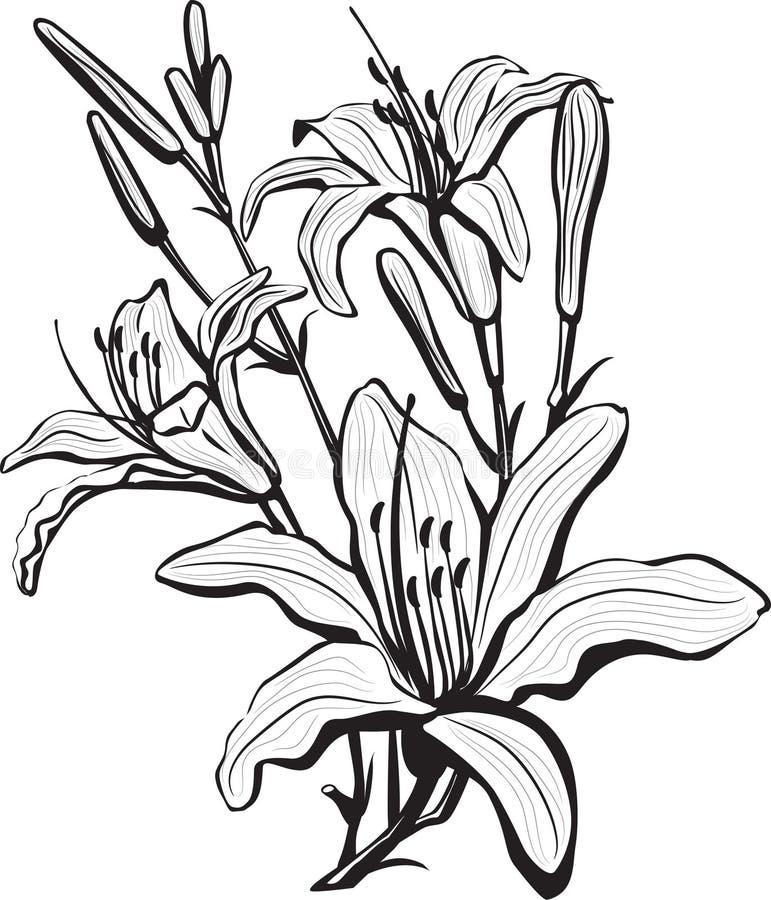 blommaliljan skissar royaltyfri illustrationer