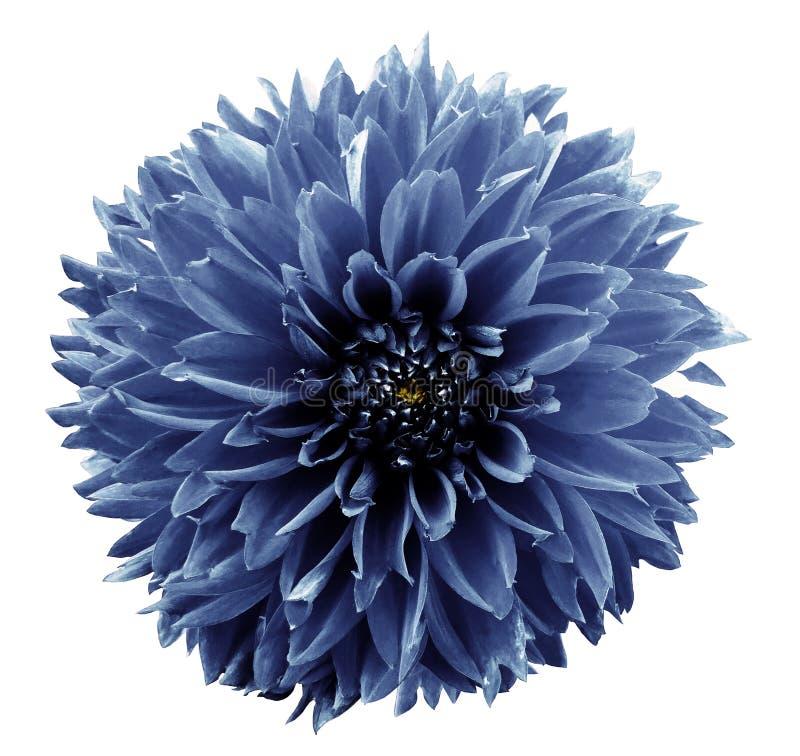 Blommaljus - blå dahlia Vit isolerad bakgrund med den snabba banan closeup Inget skuggar För design royaltyfri bild
