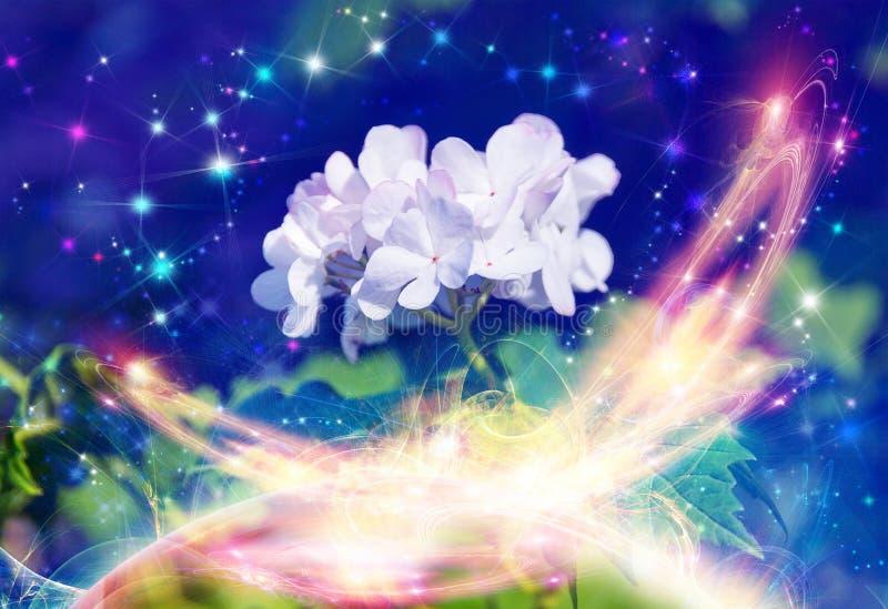 blommamagiviburnum vektor illustrationer