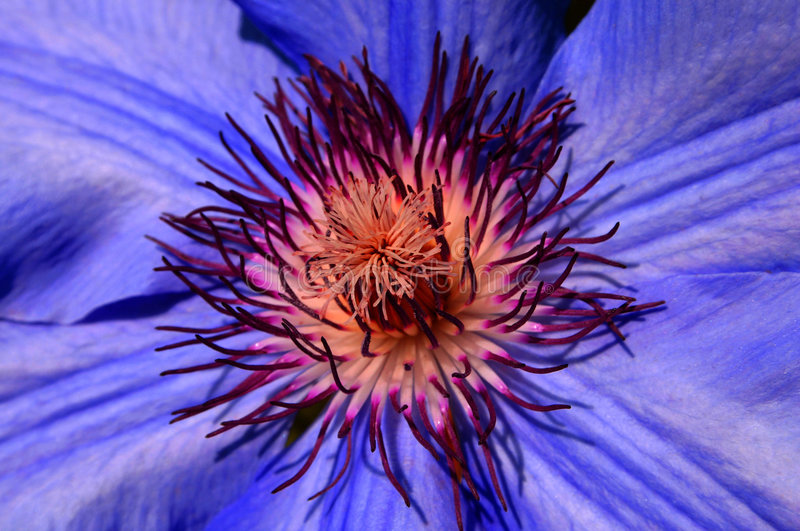 blommamakro arkivfoton