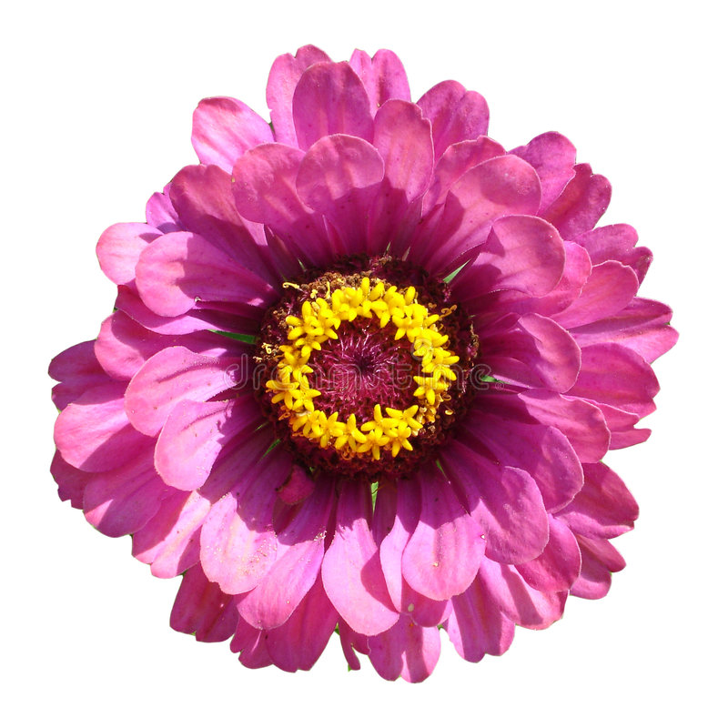 blommamakro royaltyfri foto