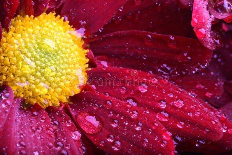 blommamakro fotografering för bildbyråer