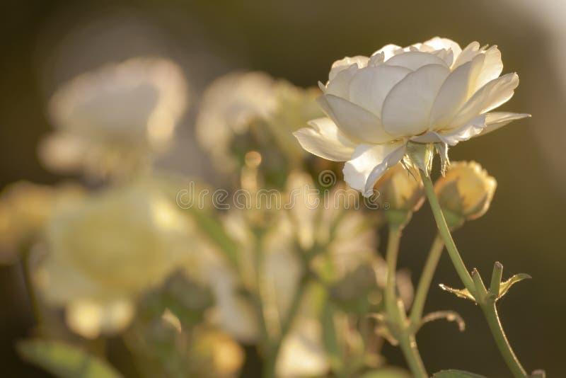 Blommamakrocloseup arkivbild
