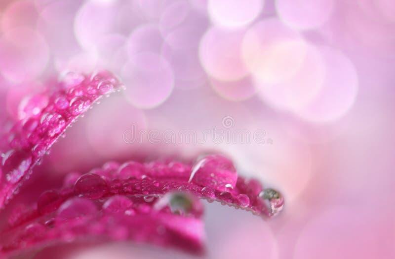 blommamakropink royaltyfria foton