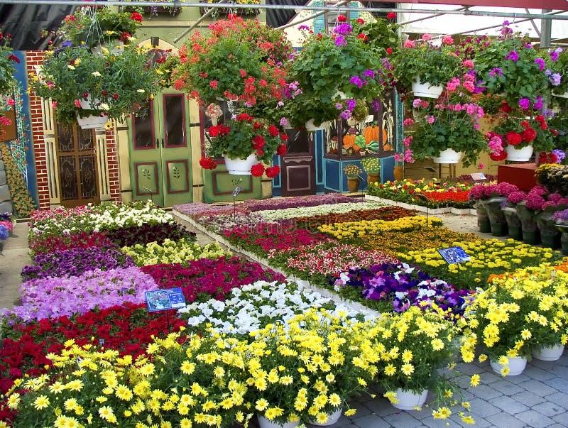 blommamarknad royaltyfri foto