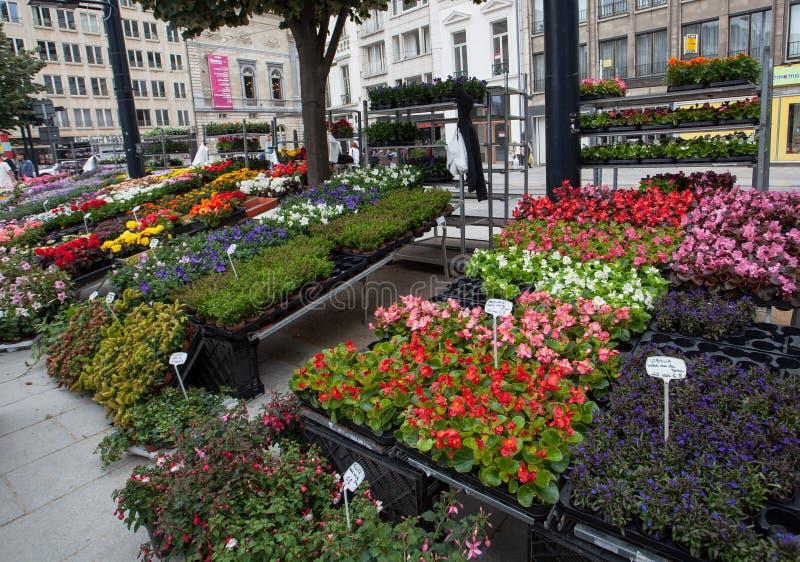 Blommamarknad i Ghent arkivbild