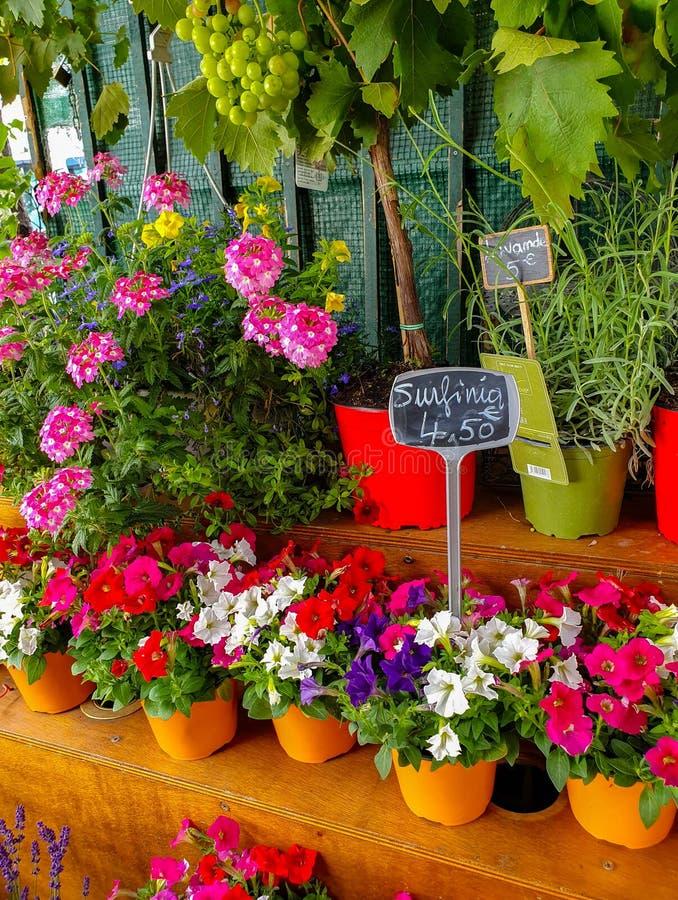 Blommamarknaden i Paris lokaliserade på Ilen de la Citera, mellan det Notre-Dame domkyrka- och Sainte-Chapelle kapellet arkivfoton