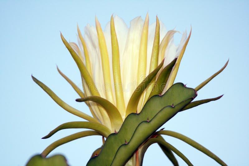 blommamoon arkivbild
